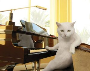 Learning a new song - Piano Cat
